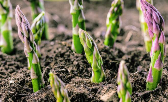 Themenwochen Frühling